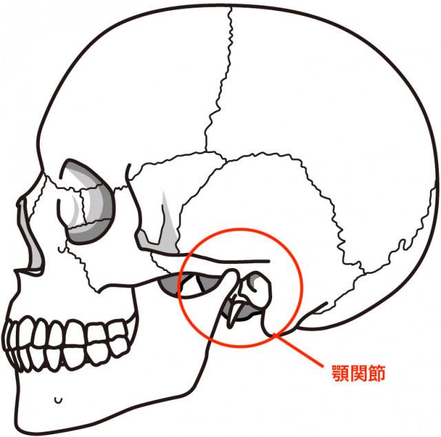 顎関節の骨格イラスト