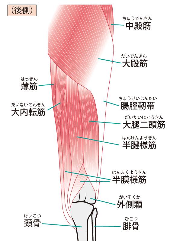 腸脛靭帯のイラスト